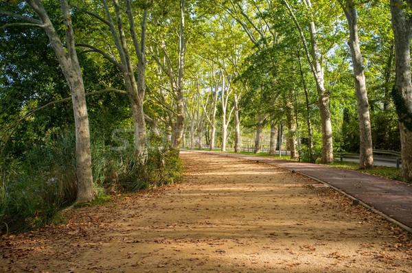 Stock photo: Beautiful walkway view