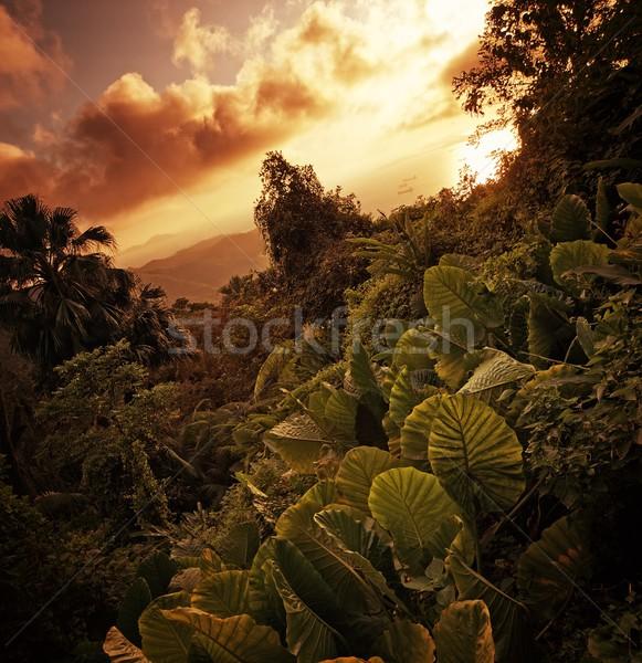 Majestic landscape Stock photo © Nejron