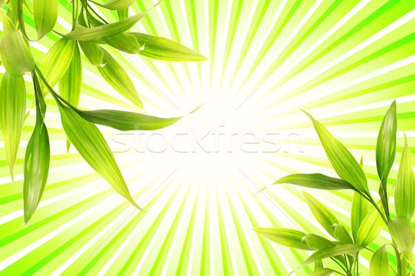 Bambusz növény absztrakt zöld fa tavasz Stock fotó © Nejron
