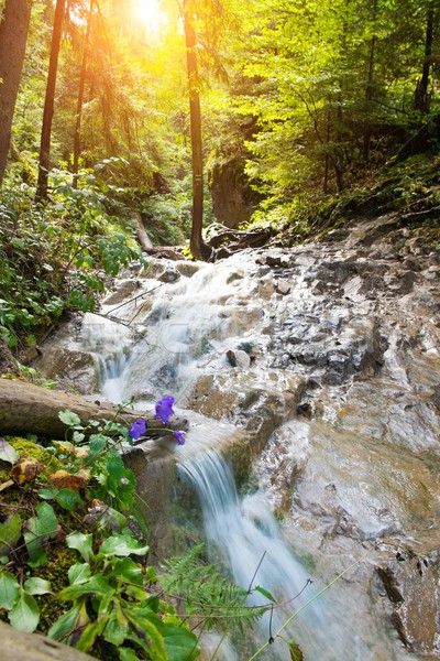 Fast river in a forest in Slovak Paradise, Slovakia Stock photo © Nejron
