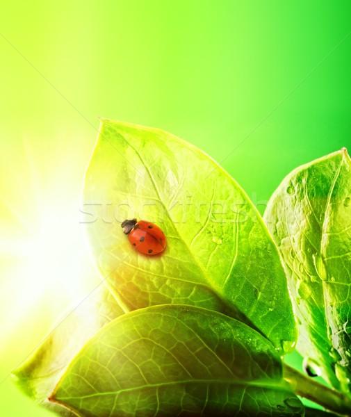 Foto stock: Joaninha · fresco · folhas · verdes · água · abstrato · natureza