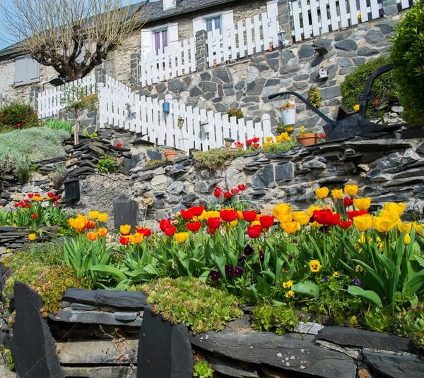 Beautiful tulip garden near rural house in Galey village, France Stock photo © Nejron