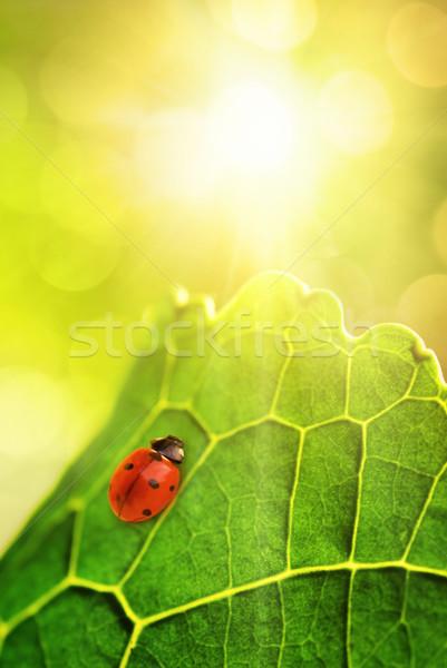 Joaninha sessão folha verde raso textura Foto stock © Nejron