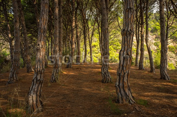 Beautiful forest Stock photo © Nejron