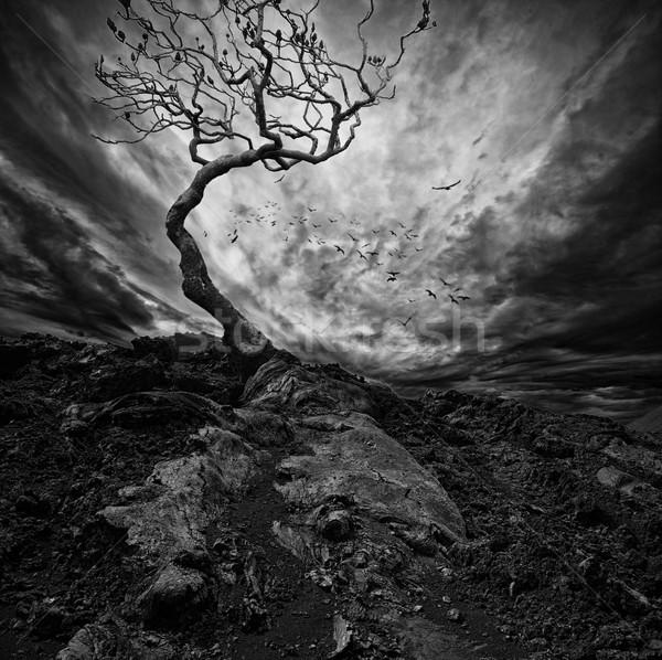 Dramático céu velho solitário árvore pôr do sol Foto stock © Nejron