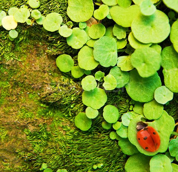 Uğur böceği oturma yeşil ot soyut bahçe arka plan Stok fotoğraf © Nejron