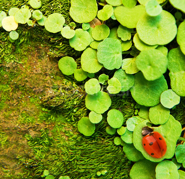 Coccinella seduta erba verde abstract giardino sfondo Foto d'archivio © Nejron