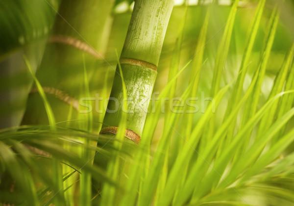 Zöld növény közelkép fa erdő absztrakt Stock fotó © Nejron