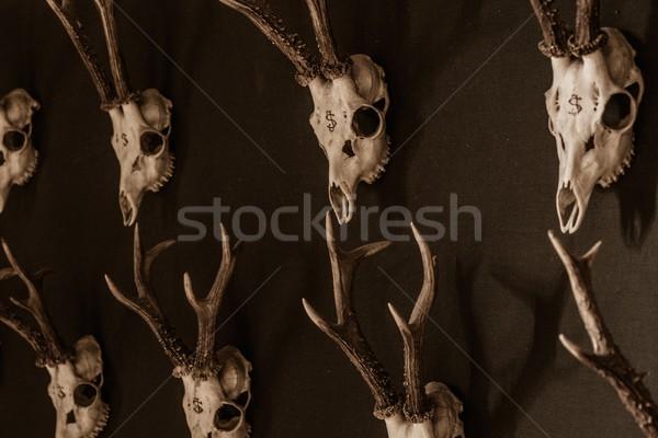 Muro legno natura interni morti Foto d'archivio © Nejron