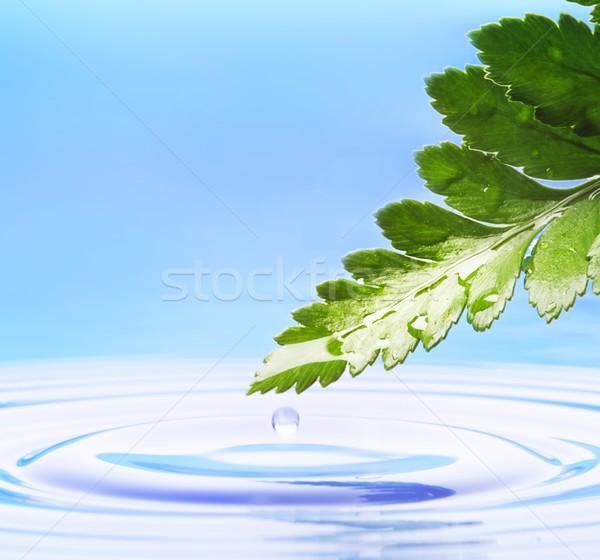 Fraîches feuille verte rendu eau printemps herbe Photo stock © Nejron