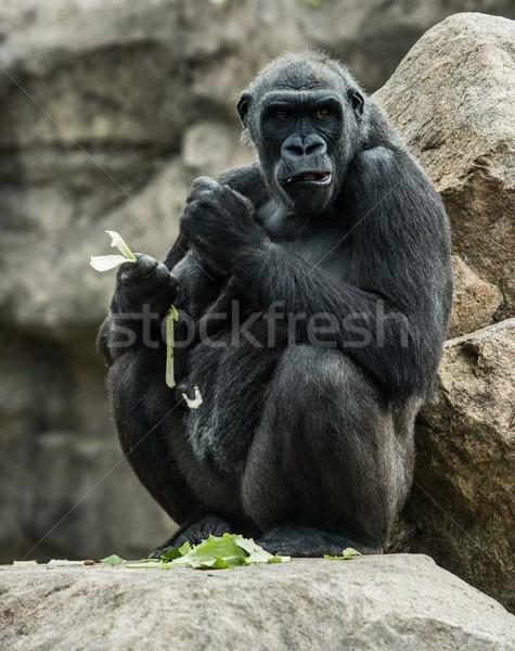 Groot zwarte gorilla vergadering rock eten Stockfoto © Nejron