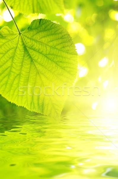 ストックフォト: 画像 · 緑の葉 · 抽象的な · ぼやけた · 春 · 太陽