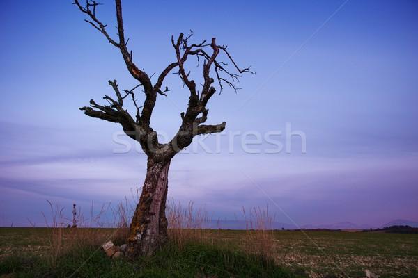 Gedroogd eenzaam boom veld hemel natuur Stockfoto © Nejron