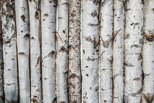 Birch wooden background Stock photo © Nejron