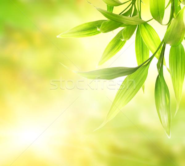 Vert bambou laisse résumé floue printemps Photo stock © Nejron
