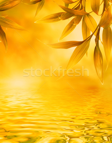 Golden leaves reflected in water Stock photo © Nejron
