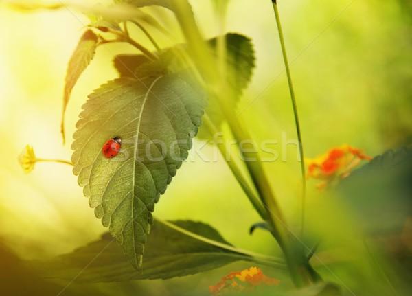 Katicabogár zöld levél fa tavasz nap természet Stock fotó © Nejron
