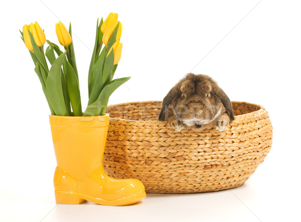 Rabbit inside wicker basket isolated on white background Stock photo © Nejron