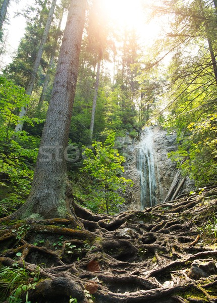 Waterfall in a forest in Slovak Paradise, Slovakia Stock photo © Nejron