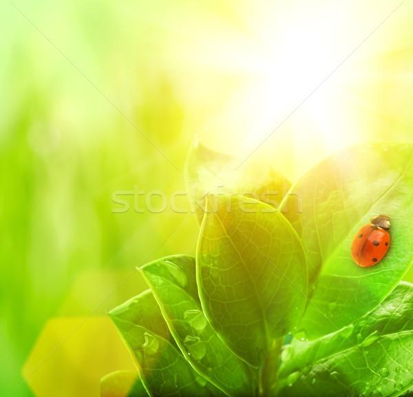 Katicabogár ül zöld levél fű természet háttér Stock fotó © Nejron