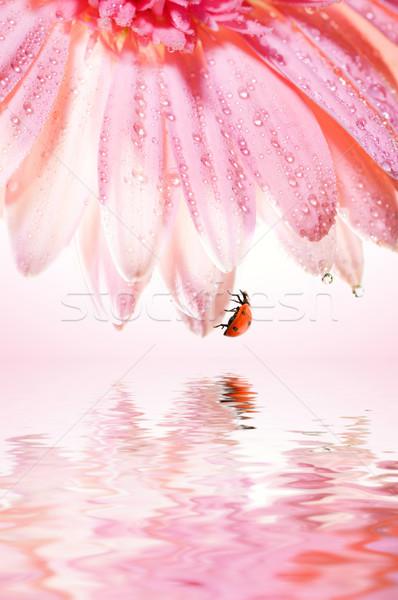 Güzel gül çiçek uğur böceği yaprakları render Stok fotoğraf © Nejron