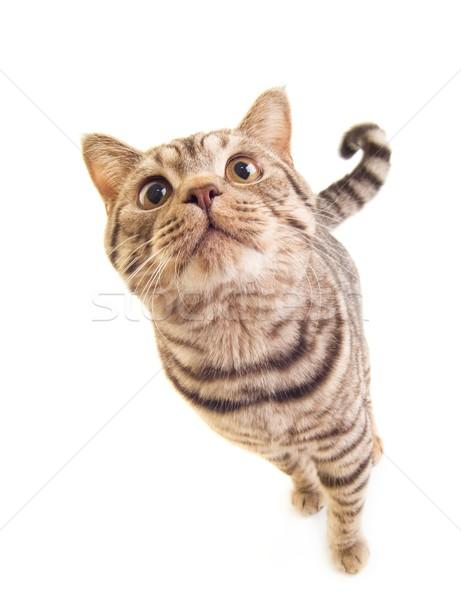 Sweet funny kitten Stock photo © Nejron