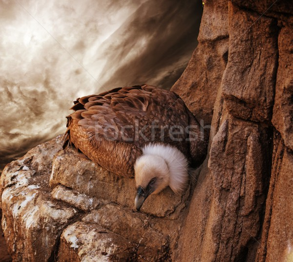 Eagle sitting on a rock against stormy sky Stock photo © Nejron