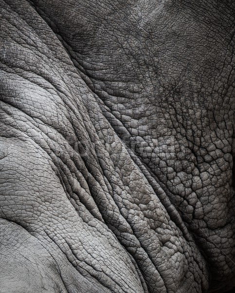 Rhinoceros skin texture Stock photo © Nejron