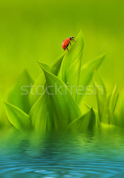 Ladybug sitting on green grass reflected in rendered water Stock photo © Nejron