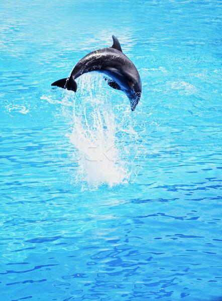 Delfin skoki morza charakter ocean skok Zdjęcia stock © Nejron