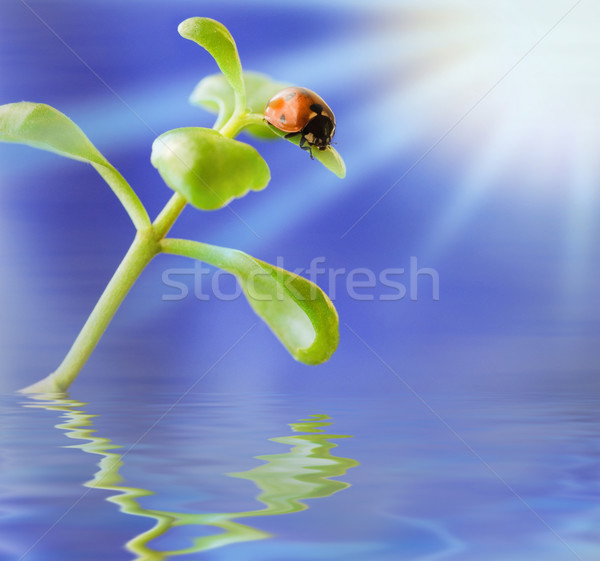 Ladybird on green plant Stock photo © Nejron