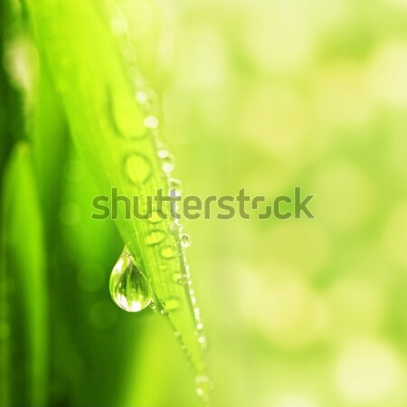 зеленая трава капли воды красивой женщину орхидеи Сток-фото © Nejron