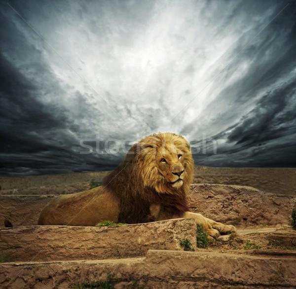 Africaine lion désert ciel chat fond Photo stock © Nejron