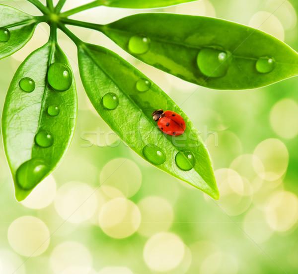 Katicabogár ül zöld zöld levél fű természet Stock fotó © Nejron