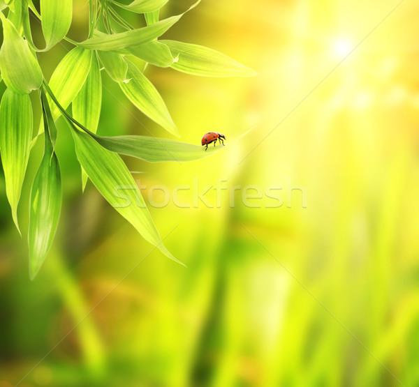 Katicabogár ül bambusz levelek tavasz természet Stock fotó © Nejron