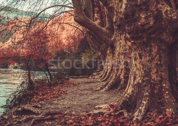 Walkway near river Stock photo © Nejron