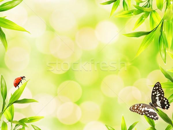 Katicabogarak ül bambusz levelek fa fű Stock fotó © Nejron