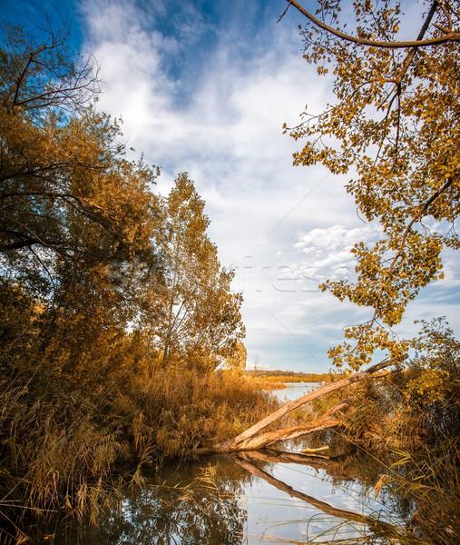 See Ansicht Bäume Wasser Baum Landschaft Stock foto © Nejron
