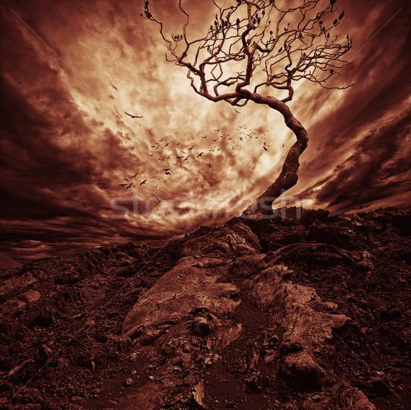 Foto stock: Dramático · céu · velho · solitário · árvore · pôr · do · sol