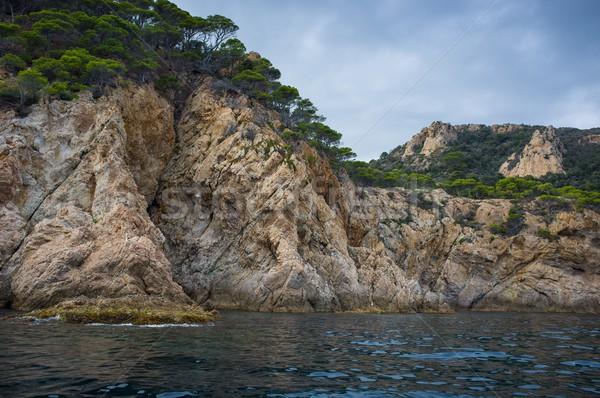 Trees growing on rocky seashore Stock photo © Nejron