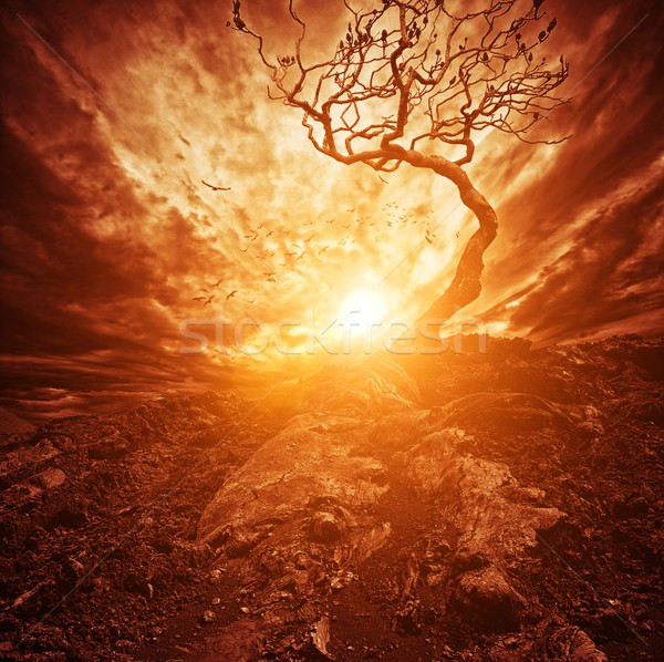 Dramatic sunset over old lonely tree Stock photo © Nejron