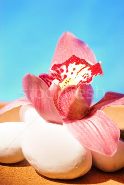 Pink orchid on white stones Stock photo © Nejron