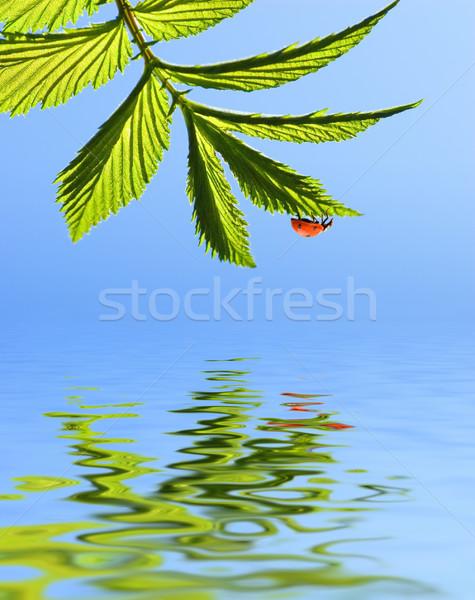 Katicabogár zöld levél renderelt víz textúra nap Stock fotó © Nejron