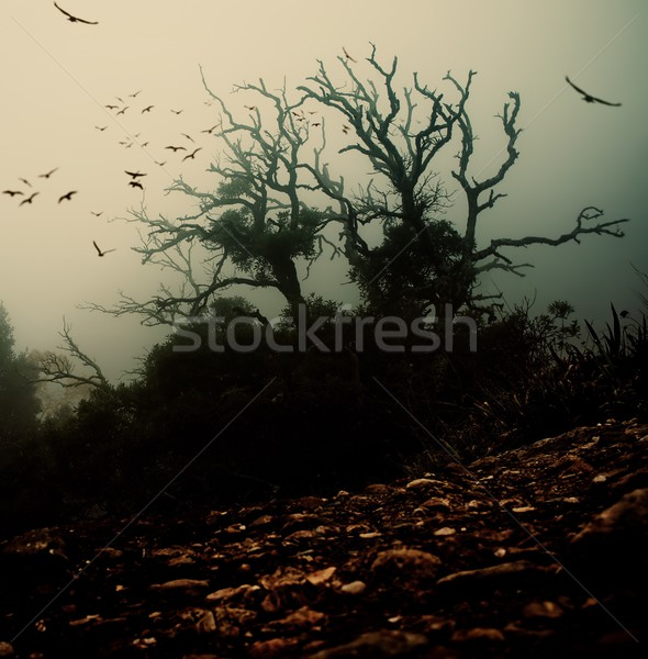 Old spooky tree with birds over it  Stock photo © Nejron