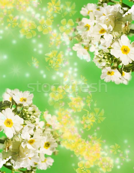 Rumianek kwiat tle piękna lata Zdjęcia stock © Nejron