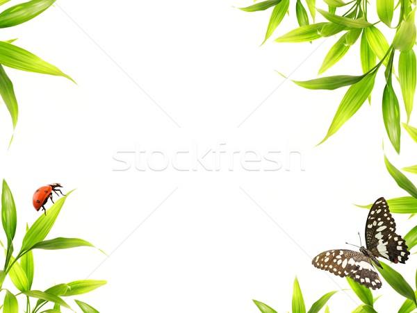 Katicabogarak ül bambusz levelek fa fény Stock fotó © Nejron