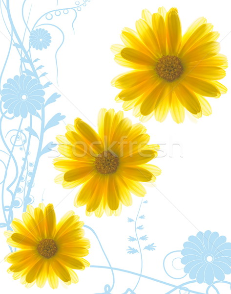 Yellow flowers on abstract blue background Stock photo © Nejron