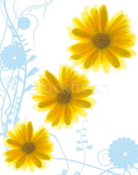 żółte kwiaty streszczenie niebieski wiosną charakter tle Zdjęcia stock © Nejron