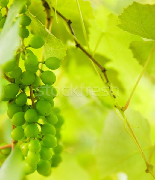 Green grapes close-up shot Stock photo © Nejron