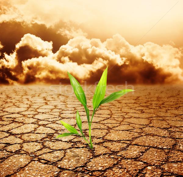 Verde planta crescente morto solo sol Foto stock © Nejron